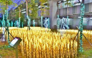 慶「豐」年賀「原」宵 稻穗燈、白鷺鷥點亮豐原火車站。(記者高秋敏翻攝)